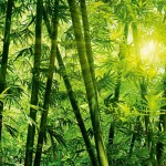 00123-Bamboo-Forest-0