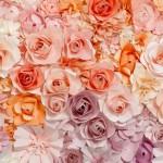 00147-Flowers-0