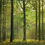 00216-Autumn-Forest-0