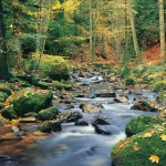 00278-Forest-Stream-0