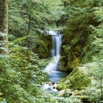 00279-Waterfall-in-Spring-0