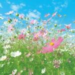 00281-Flower-Meadow-0