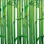00421-Bamboo-0