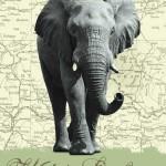 00431-Wild-Safari-0