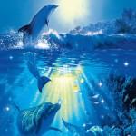 00513-Dolphin-in-the-Sun-0