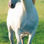 00514-White-Horse-0