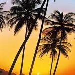 00529-Sunny-Palms-0