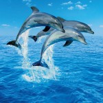 00599-Three-Dolphins-0